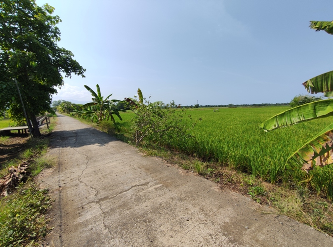 Rice Farm and Houses with Commercial Area